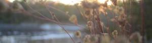 cropped-dsc_0554.jpg